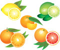 Citrus fruits photo realistic detailed set Royalty Free Stock Photos