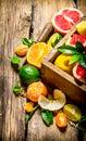 Citrus - grapefruit, orange, tangerine, lemon, lime in an old box. Royalty Free Stock Photo