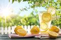 Citrus lemonade in garden setting. Royalty Free Stock Photo