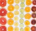 Citrus plants Royalty Free Stock Photo