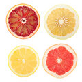 Citrus slices Stock Photos