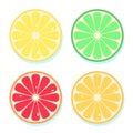 Citrus slices of lemon, orange, lime and grapefruit. Vector illustration