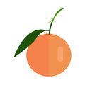 Citrus Vector Illustration In Flat Style Design. Royalty Free Stock Photo