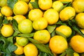 Citrus yellow fruit very sweet crisp it is food Royalty Free Stock Photos