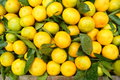 Citrus yellow fruit very sweet crisp it is food Stock Photos