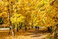 City park alley in autumn Royalty Free Stock Photo