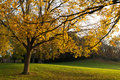 City park in autumn inner sun through beech leaves creating a golden light Royalty Free Stock Images