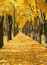 City park at autumn season, trees in a row with fallen yellow leaves, bright beautiful landscape at sunny day Royalty Free Stock Photo
