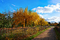 City park peterhof golden autumn russia Royalty Free Stock Photo