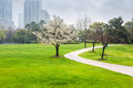 City park in spring Royalty Free Stock Photo