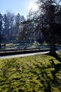 City park in sunny day with shadows of trees and pathway Royalty Free Stock Photo