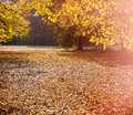 Cityscape in the autumn park Royalty Free Stock Photo