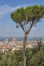 Cityscape of Florence, Italy with Duomo Cathedral and parasol pine