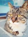 Boquear gato 2