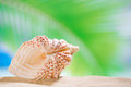 Clam seashell with ocean beach and pam tree leaf seascape shallow dof Stock Photo