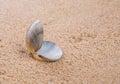 Clam Shell On Beach Sand I Royalty Free Stock Photo