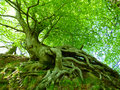 Clambering Roots in green Royalty Free Stock Photo