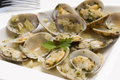 Clams. Stock Photos