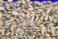 Clams a background of fresh for sale at a market Royalty Free Stock Photo