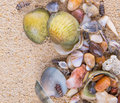 Clams On Beach Sand III Royalty Free Stock Photo