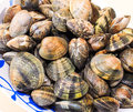 Clams for cooking Royalty Free Stock Photo