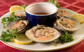 Clams on the half shell Stock Photo
