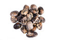 Clams On White Royalty Free Stock Photo