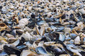 Clamshells variety at seashore Royalty Free Stock Photo