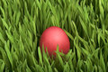 Classic Easter egg and green grass Stock Photography