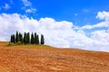 Classic tuscan landscape famous cluster of cypress trees among the fields of tuscany italy Royalty Free Stock Images