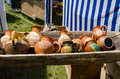 Clay jugs lying in wooden trough at village market Royalty Free Stock Photo