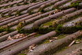 Clay Roof Shingles European German Moss Dirty Old Shed Top Close Royalty Free Stock Photo