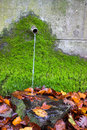 Clean fresh water from water source with green moss and autumn leaves Royalty Free Stock Image
