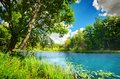 Clean lake in green spring summer forest tranquil blue sunny sky Royalty Free Stock Image