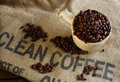 Clean organic coffee beans guatemalan in cup isolated on burlap Royalty Free Stock Photos