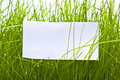 Clean sheet in green grass Royalty Free Stock Photo