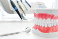Clean Teeth Dental Jaw Model, ...
