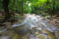 A clean water stream in rainforest flows within tropical Royalty Free Stock Images