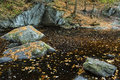 Clear amber pool with floating leaves, at Enders State Park, Con Royalty Free Stock Photo
