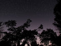 Clear forest night sky at dawn background Stock Image