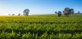 Clear fresh morning in the clare valley south australia Stock Photo