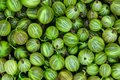 Clear and sharp close up view of fresh green gooseberries background surface Royalty Free Stock Photo