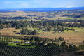Clear views over australian landscape the in the macarthur region with an olive grove in the foreground Stock Photo