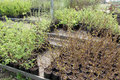 Clearance sale of sprouts in pots Stock Photos
