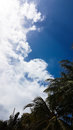 Clearly white clouds in sky blue above top of palm tree Royalty Free Stock Photo