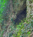 Cleft in the rock and tree roots crack deep of trees beautiful background Royalty Free Stock Photography