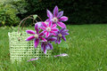 Clematis basket Stock Photography