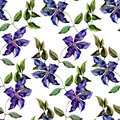 Clematis flower pattern beautiful vector with nice flowers Stock Photography