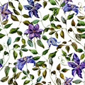Clematis flower pattern beautiful vector with nice flowers Royalty Free Stock Photo