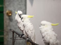 Clever parrot parrots they are very lovely and they can dance and do somersaults they are good at maths Stock Photos